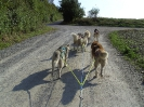 huskies_unterwegs_20091003_37