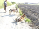 huskies_unterwegs_20091003_38